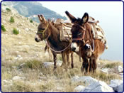 Donkeys - Dubrovnik Adventure